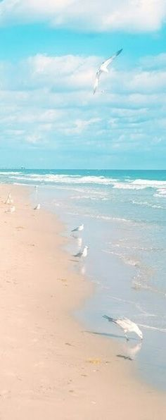 Ocean Sea: Sun, sand, surf, and seagulls. Beach Art, Ocean Beach, Ocean Waves, Juno Beach, I Love The Beach, Pretty Beach, Beautiful Beaches, Seaside, Coastal