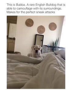 Outstanding funny dogs tips are available on our internet site. Funny Animal Memes, Dog Memes, Cute Funny Animals, Funny Animal Pictures, Cute Baby Animals, Funny Cute, Funny Dogs, Animals And Pets, Funny Memes