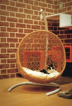 Hanging Chair for kitties.