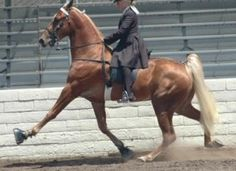 Strengthen policies in the Horse Protection Act to end horrific and all-too-common abuse of Tennessee Walking horses.