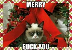 Grumpy cat frowns on your shenanigans. Grumpy cat is not impressed. I wonder if grumpy cat is an engineer. I did find some Grumpy Cat gifs: Grumpy Cat say \ Grumpy Cat Christmas, Christmas Humor, Christmas Themes, Merry Christmas, Christmas Pictures, Christmas Stuff, Christmas Animals, Christmas Quotes, Christmas Decorations