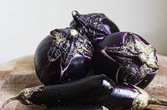 Eggplant Primer