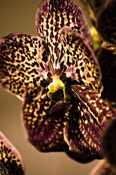 Never break your head over the name of an orchid. Just enjoy it while it is still in front of your eyes.