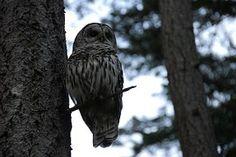 Eule, Vogel, Baum, Nächtliche, Sitzend