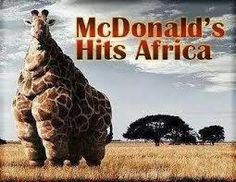 Image result for mcdonalds hits africa giraffe