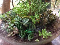 Dinosaur succulent terrarium
