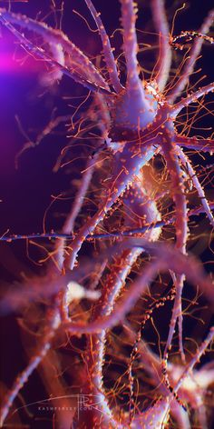 Brain Neurons by Alexey Kashpersky, via Behance