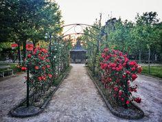 La vida no es siempre un camino de rosas,pero hay que disfrutar de cada momento #parquegrande #zaragoza #flowers #roses #red #white #pink #beautiful #cool #sunset
