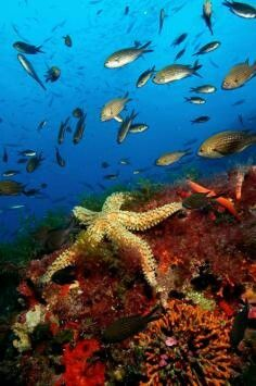 Starfish and Fish