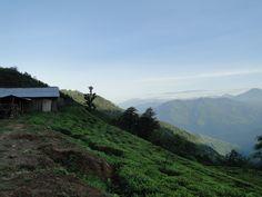 Beautiful tea field in #Ilam region of #Himalaya in #Nepal