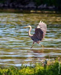 The Strut by Judee Schofield on YouPic Canon Eos Rebel, Canon Ef, The Struts, Nature, Animals, Naturaleza, Animales, Animaux, Animal