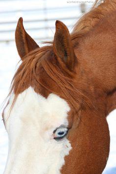 Hello blue eyes.