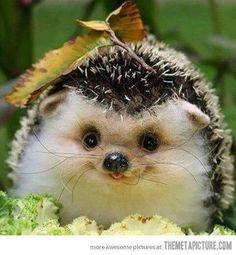 Happy baby hedgehog :)). Ahhhhhhhhhh so cute I'm gonna die!