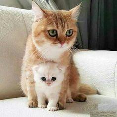 Mummy care... - more at megacutie.co.uk