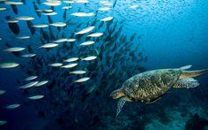 20+ Picturesque & Stunning Underwater Wallpapers - Hongkiat