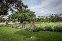 Beautiful flower beds in the fall in the Tuileries Garden  in Paris.