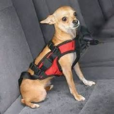 Dog Safety Supplies Images - - Yahoo Image Search Results