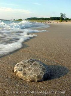 Petosky Stone on the beach -- Petosky stones are only found in Michigan!  Featured in the Leelanau Enterprise ...