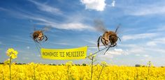 #Greenpeace urges further action on #bees