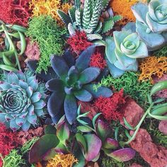 beautiful succulent colors! photo by @nathangodding edited with #litely