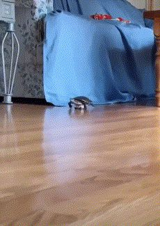 Watch warp speed GIF and enjoy it. With KeepGif you can create GIF from video with a few clicks Little Husky, Apple Bottom Jeans, Dancing Baby, Kissing Him, Video Link, Super Powers, Helping People, Illusions, Turtle
