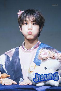 Stray kids nine or none Lee Min Ho, Cute Squirrel, Baby Squirrel, Sung Lee, Ji Sung, Jimin Jungkook, Incheon, K Pop, Rapper