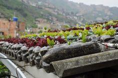 Techo verde. Los tejados que dan comida
