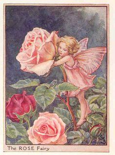 the rose fairy...