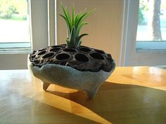 Clever creation at MyZen.Etsy.com... a cement cast pot from a lotus pod!