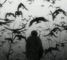 45 Ideas For Raven Bird Photography Gothic