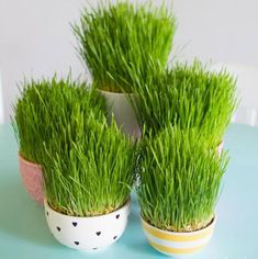 Dyi, Planter Pots, Herbs, Easter, Decorations, Easter Activities, Dekoration, Herb, Ornaments