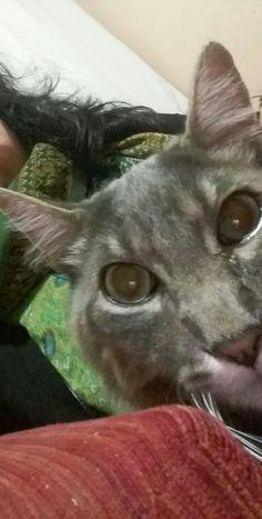 Selfie cat 😀