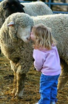Sheep are sweet. I can't even handle how cute this little girl nuzzling a sheep is. Animals For Kids, Farm Animals, Animals And Pets, Cute Animals, Hilarious Animals, Beautiful Creatures, Animals Beautiful, Sheep And Lamb, Sheep Farm