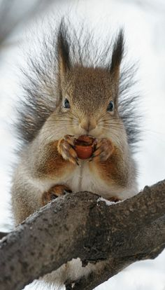 Squirrel....he looks so cold. Snow nut