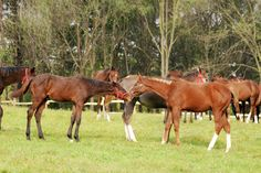 Nutrition of the Broodmare at Weaning Time