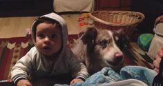 Toda criança sabe que um cachorro fará QUALQUER COISA para conseguir algo apetitoso. Mas este simpát...