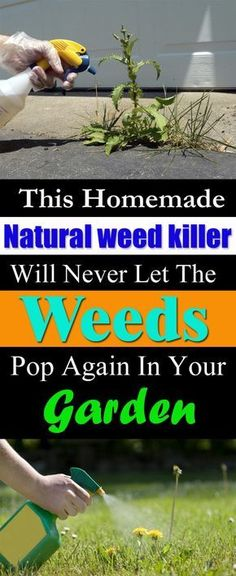 If you want to get rid of those pesky plants in your garden that pop up again & again, use vinegar. Vinegar is a natural weed killer and is used in effective weed control.