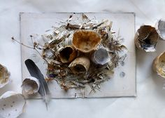where stories are being hatched. altered book with paper shells by Ines Seidel