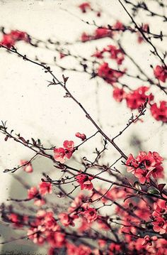 Printemps Rose - Fine Art Print - Nature Photography