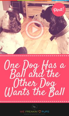 Video - One Dog Has a Ball and the Other Dog Wants the Ball  #puppies #puppy #pup #dogs #dog #pets #pet #cute #cutest #love #adorable #funny #animal