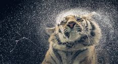 Tim Flach from his book ' More than Human'