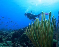 Great dives in Bonaire.
