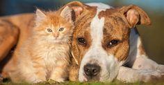 Selon un sondage récemment mené par YouGov, deux tiers des Français sont les heureux propriétaires d'un animal de compagnie. Et vous risquez d'être surpris en apprenant qui del'homme ou de la femme est plus enclin à dépenser sans compter pour celui-ci !