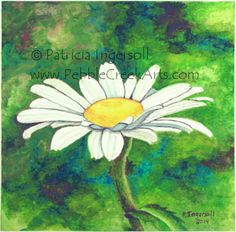 One White Daisy - Watercolor on 140 lb cold pressed watercolor paper - 6x6 - 2014 - Patricia Ingersoll