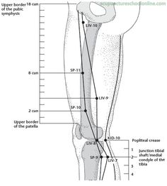 ( Leg Five Miles ZUWULI - Acupuncture Points ) On the anterior aspect of the thigh, 3 cun inferior to the upper border of the symphysis, on the lateral border of the adductor longus muscle. Five Miles, Cold Treatment, Acupuncture Points, Infused Water Bottle, Self Massage, Medical Illustration, Fitness Gifts, Acupressure, Muscles