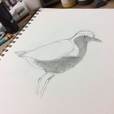 Another #plover sketch ready to make the move to canvas #birds #art #mixedmedia #wildlife #nature