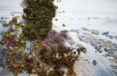 From series Healing Plants for Hurt Landscapes - Laurence Aegerter