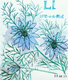 L is Love-in-a-mist #afloweraday illustration