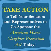 Take Action to #SaveAmericaMustangs