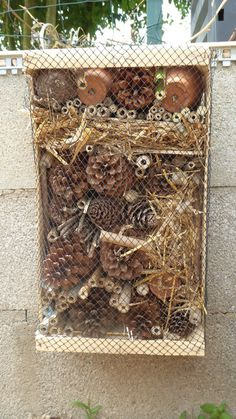 A quick and easy insect hotel - Terre Agir - A quick and easy insect hotel – Terre Agir Effektive Bilder, die wir über cabane oiseaux anbiet - Garden Insects, Garden Pests, Bug Hotel, Animal Projects, Garden Structures, Bee Keeping, Permaculture, Garden Projects, Bird Houses